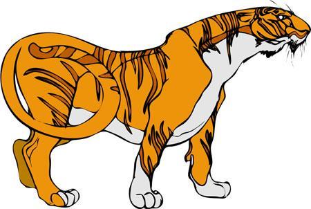 Тигр, смотрящий в правую сторону