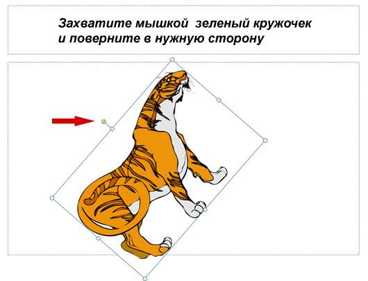 Поворот тигра