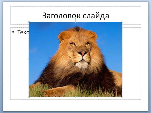 Уменьшенное изображение на слайде